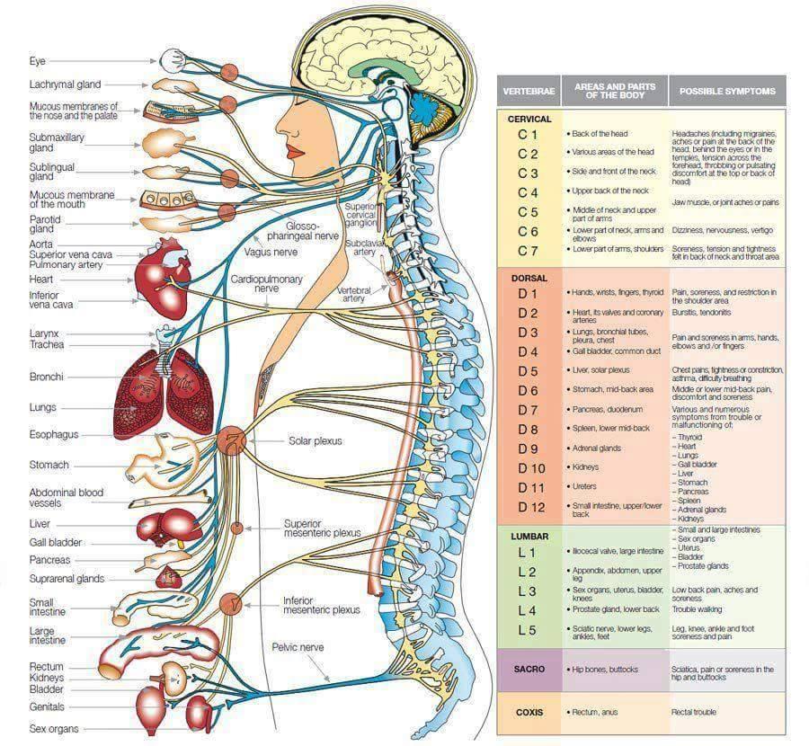 columna y conecciones